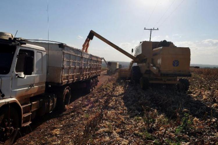 Na produção vegetal, o destaque é a nova safra recorde de soja, que tem alta prevista de 7,3% (Foto: Arquivo/Agência Brasil)