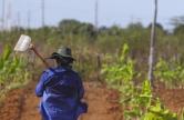 Agricultor da comunidade Tomé, na zona rural de Limoeiro do Norte