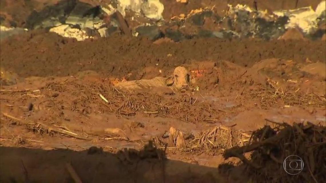 Animais ficaram atolados na região tomada pela lama da barragem (Foto: Reprodução/TV Globo)