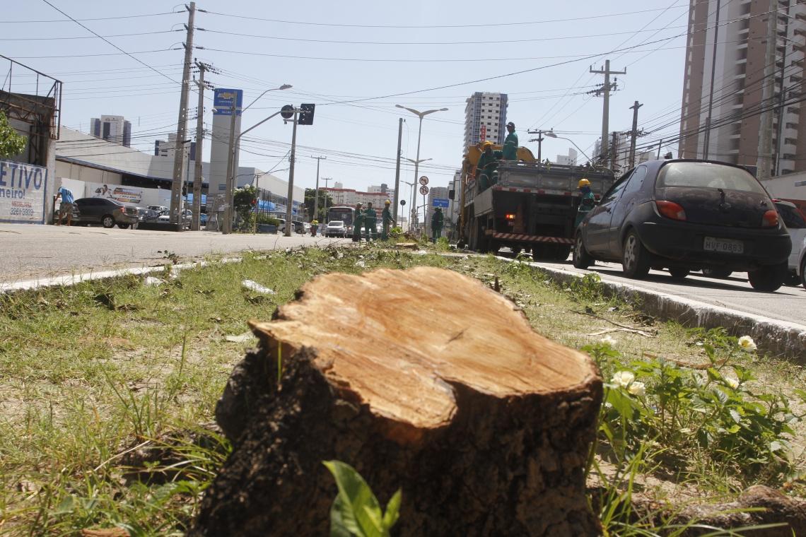Árvores são retiradas do canteiro central da avenida Santos Dumont