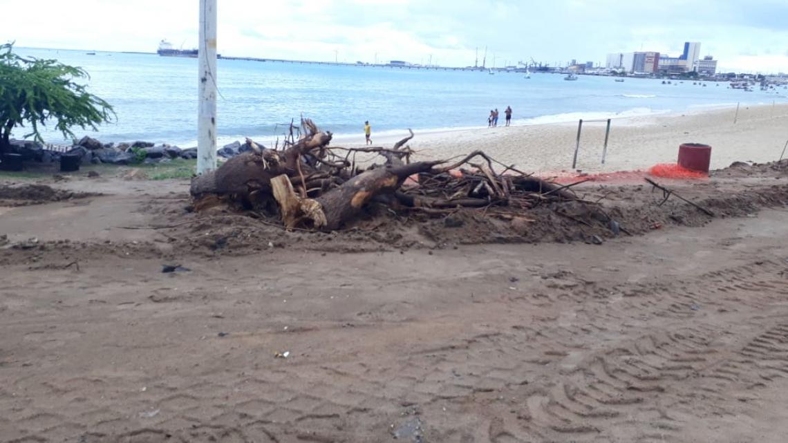 Árvores cortadas para obra paisagística na Beira Mar. Coisa de gênio