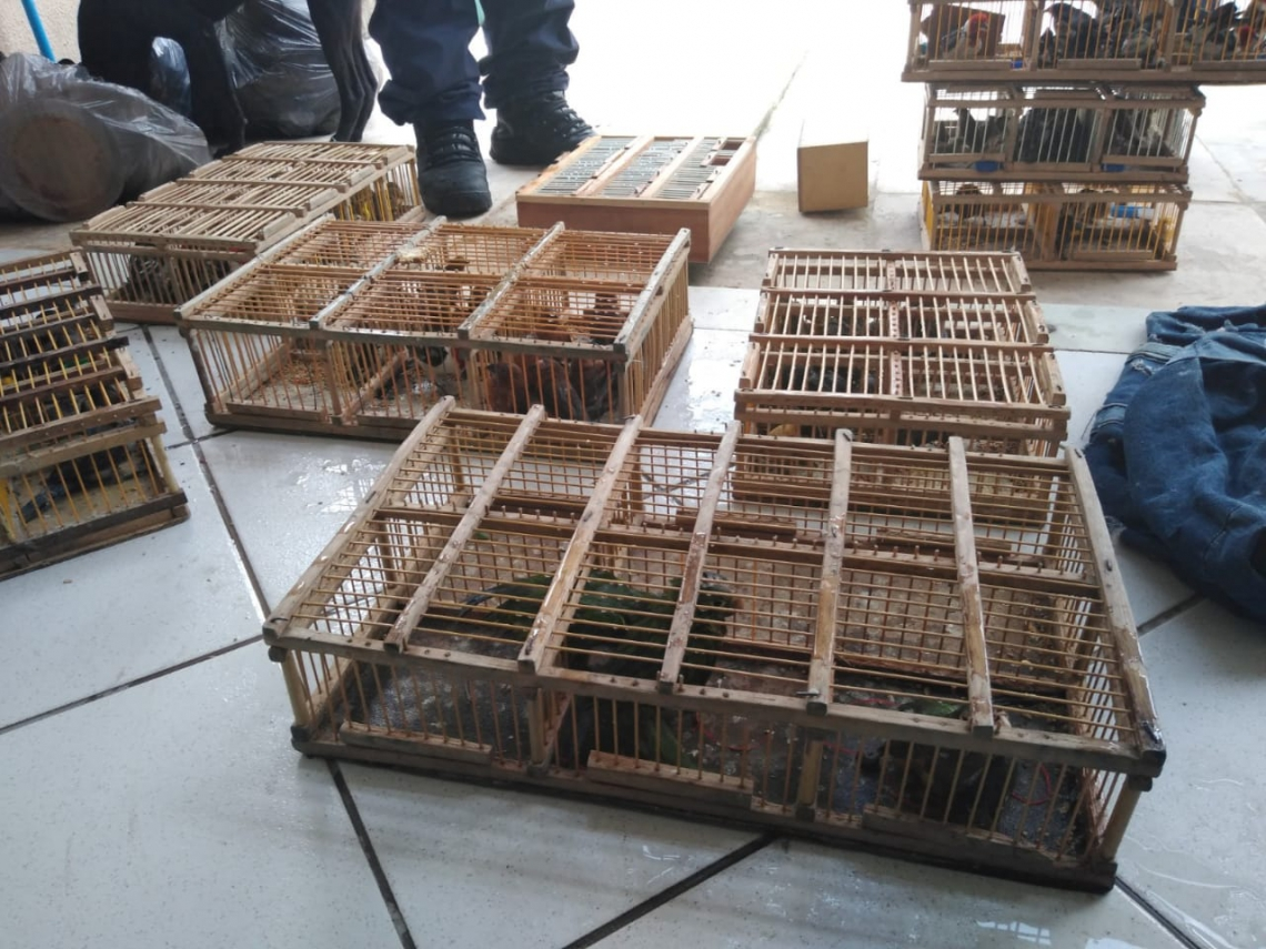 Ninguém foi preso em ação que resultou na apreensão de 141 pássaros na Feira da Parangaba (WhatsApp/ O POVO)