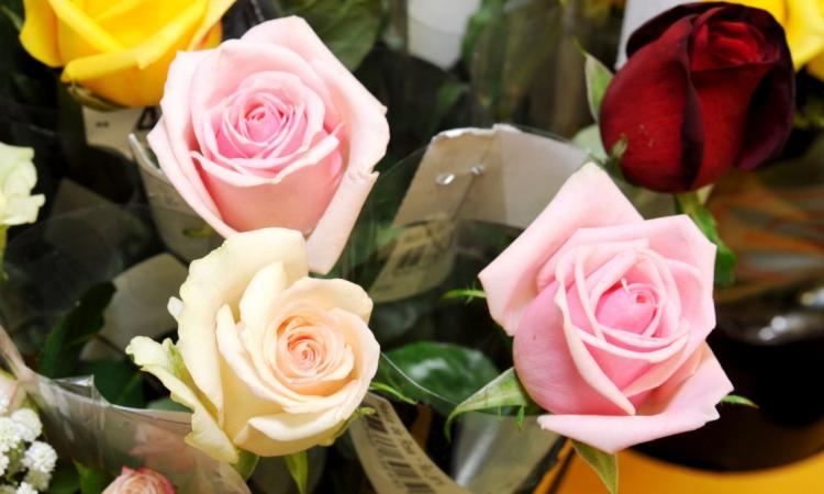 FORTALEZA, CE, BRASIL, 02-05-2014: Arranjo de rosas de diversas cores. Flores no Pão de Açúcar do bairro Mucuripe. (Foto: Camila de Almeida/O POVO)
