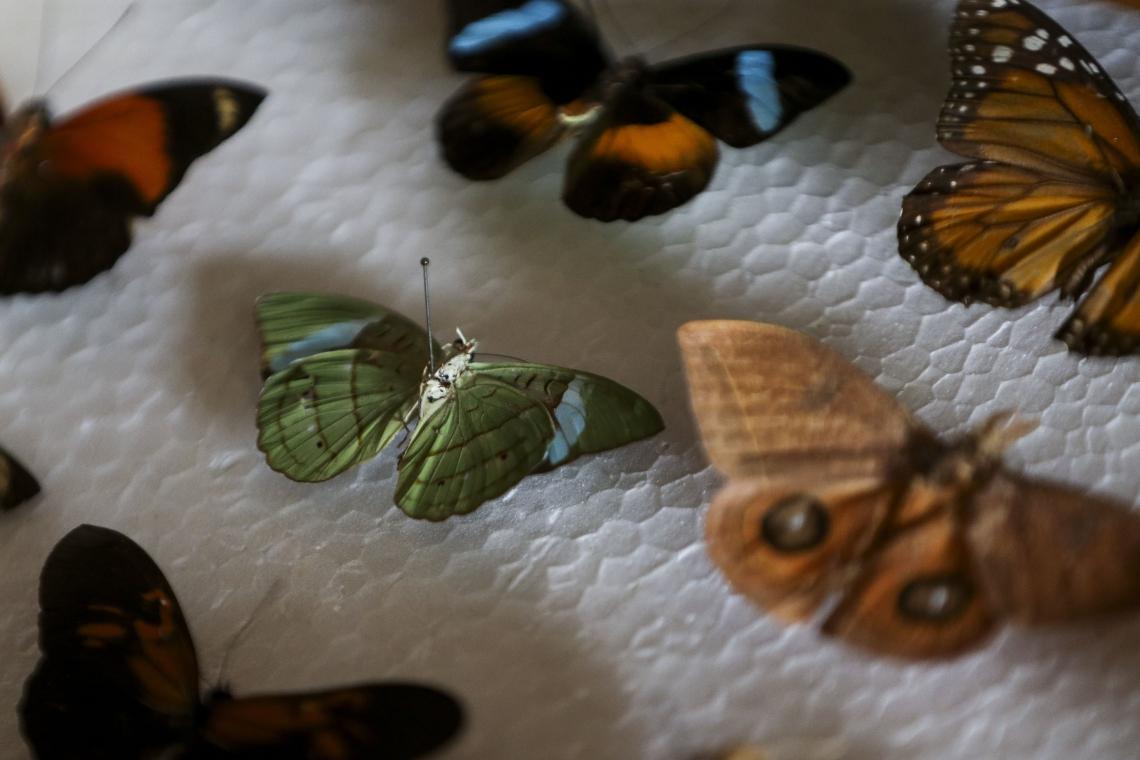 A colação tem borboletas, besouros e outros insetos