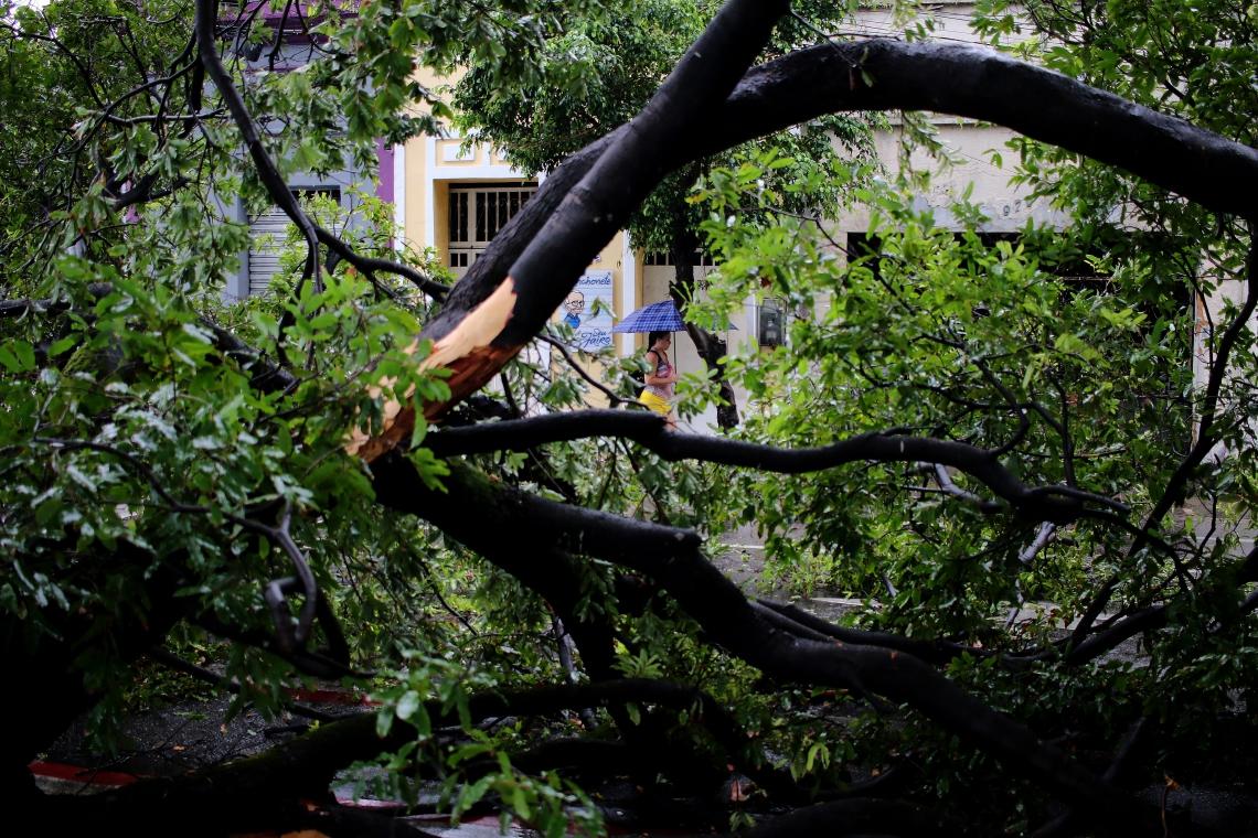 Chuva forte derrubou árvore na avenida Santos Dumont (Foto: Fábio Lima/O POVO)