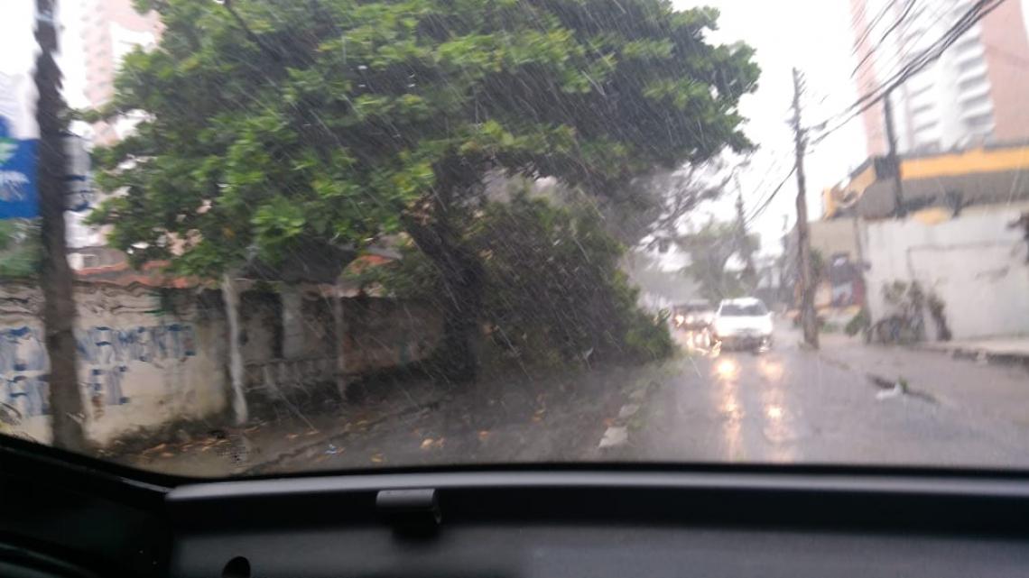 Chuva provoca queda de árvore na rua Padre Valdevino nesta quarta-feira, 6 (João Gabriel Tréz/O POVO)