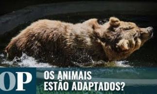 O futuro dos ursos do zoológico de Canindé