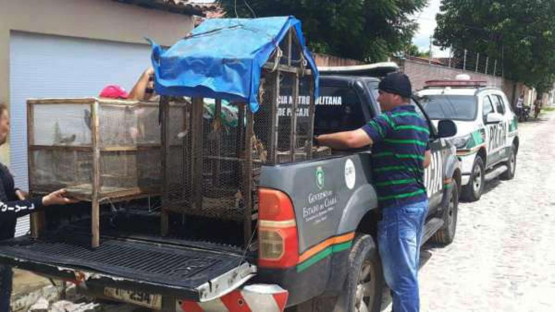 Os animais foram apreendidos com o apoio do Instituto Brasileiro do Meio Ambiente (Ibama) (Foto: Reprodução/SSDPDS)