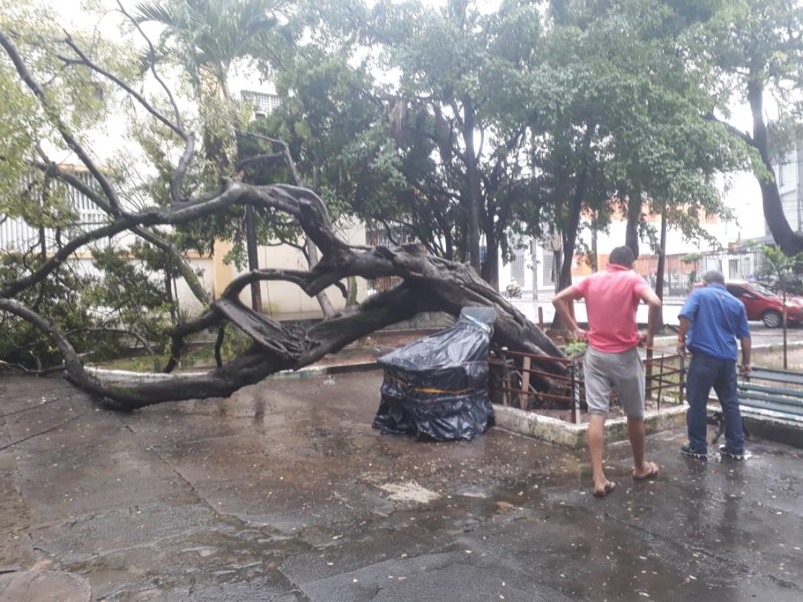 A queda da árvore não atingiu ninguém e assustou os presentes.