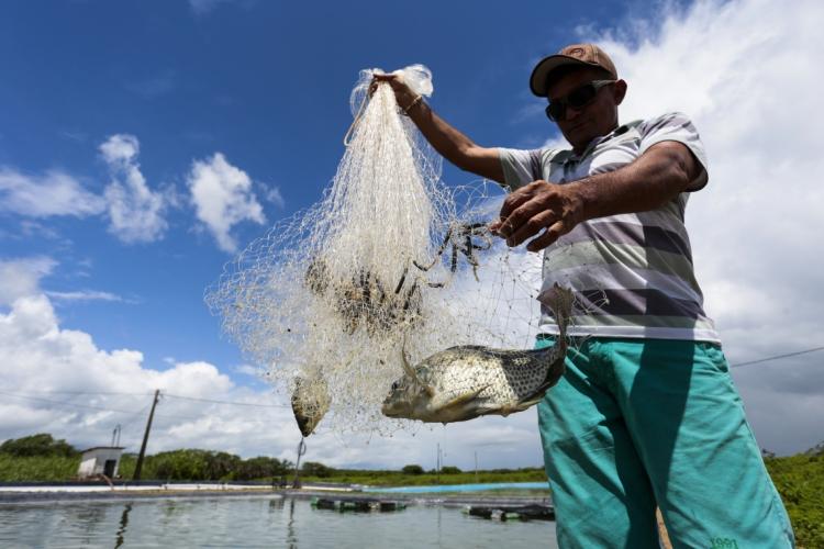 Exportação de tilápia cresce no Ceará (Foto: tatiana fortes, em 26.03.2019)