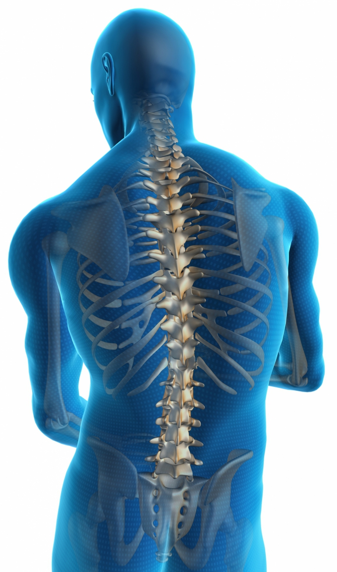 Human back with a visible spine