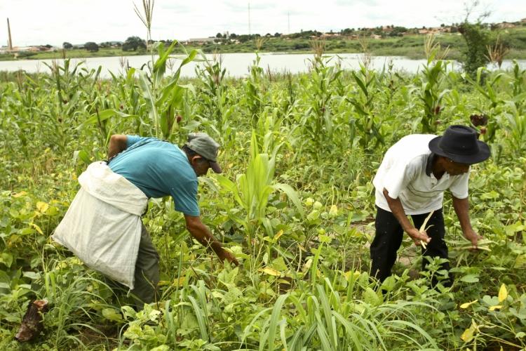 O texto aprovado definiu que poderão ter acesso às medidas os agricultores e empreendedores familiares, além de pescadores, extrativistas e silvicultores  (Foto: Tatiana Fortes)
