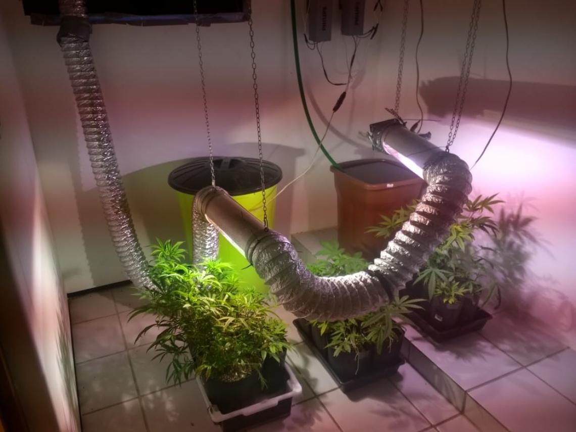 Um dos quartos já tinha toda a estrutura pronta para o cultivo, já tendo, inclusive, algumas mudas em desenvolvimento