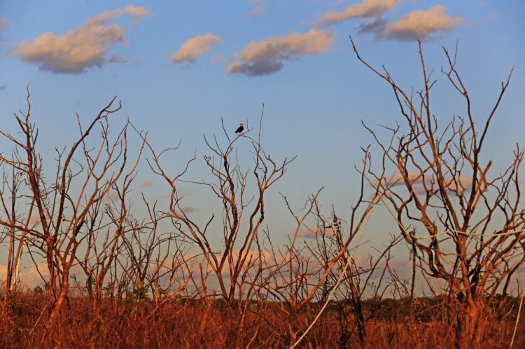 A Caatinga é um bioma exclusivamente brasileiro, mas tem sido degradada em massa.(Foto: FÁBIO LIMA)