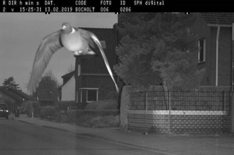 Obviamente, a ave não pode ser localizada - muito menos cobrada pela infração