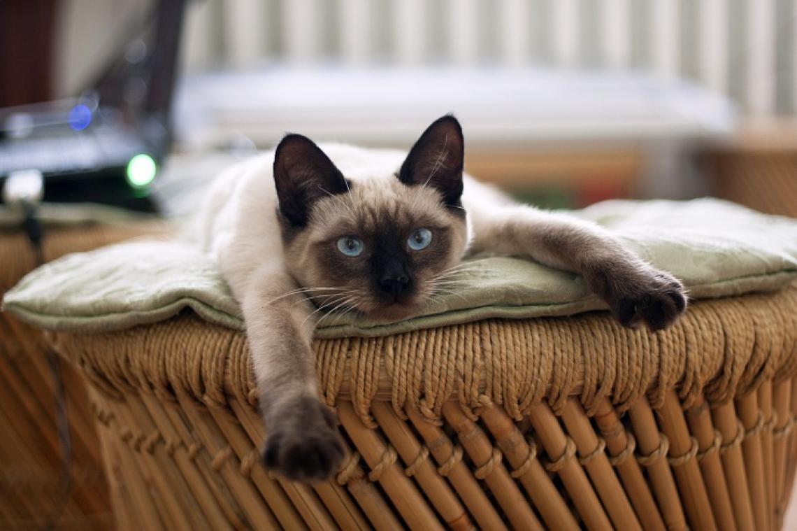 A enfermeira, tutora de uma gata de estimação, teve o pedido negado em primeiro e segundo grau.
