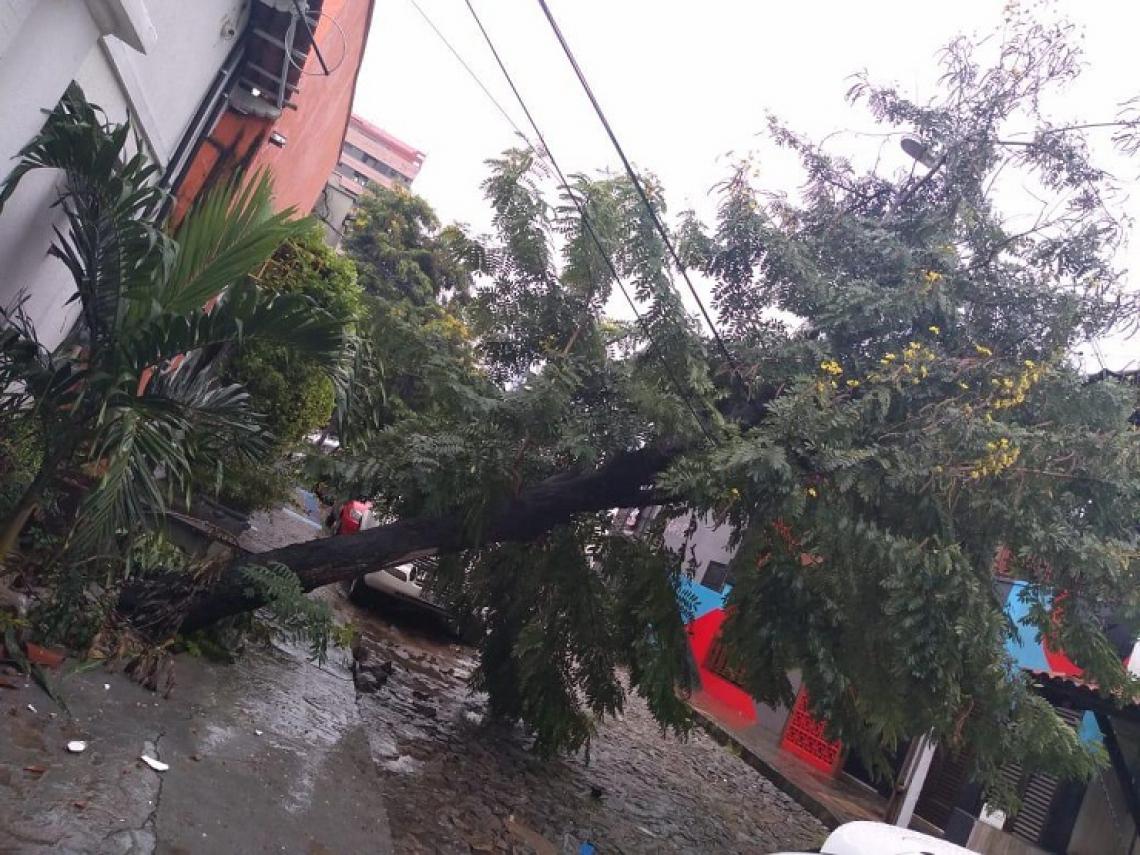 Registro do momento em que a árvore caiu na rua Norvinda Pires, no bairro Aldeota.