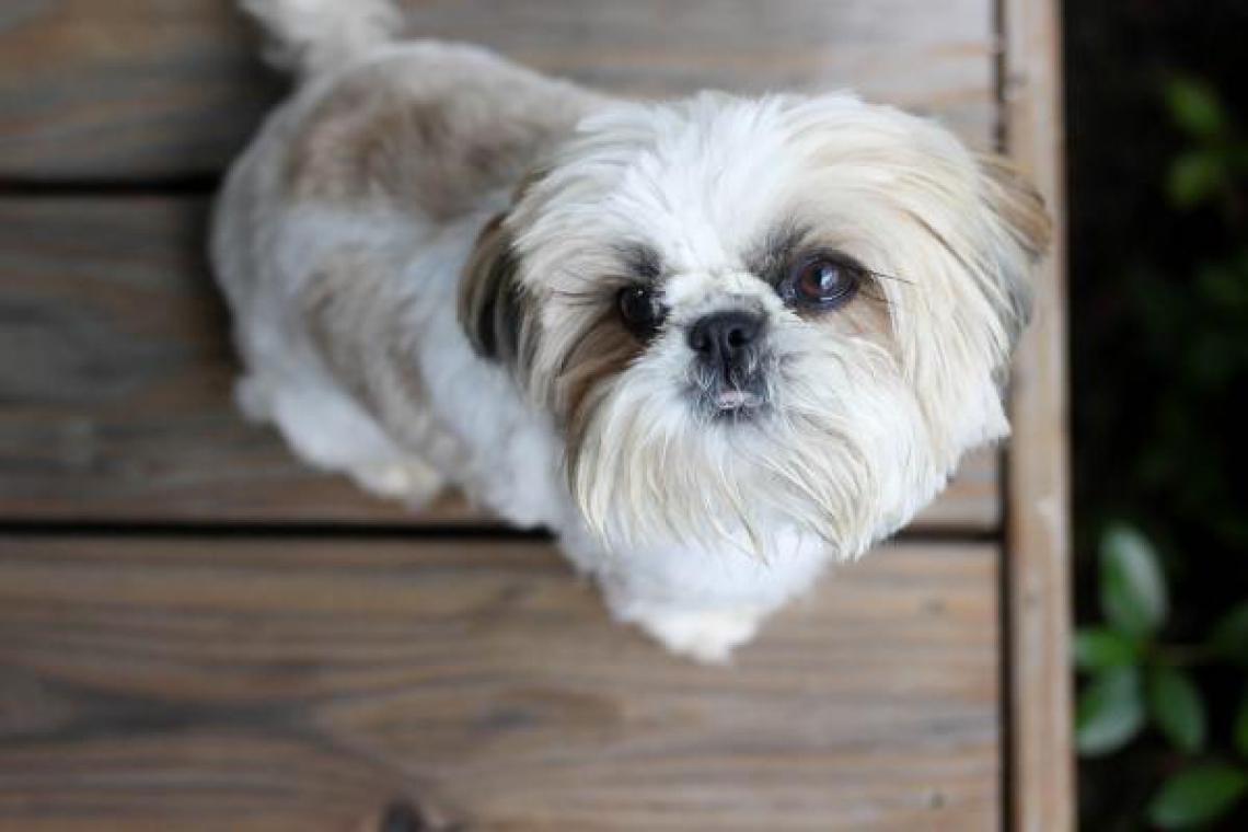 Os funcionários do abrigo tentaram convencer o advogado a pôr a cadela para adoção