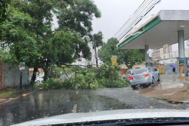 Árvore caiu na Oswaldo Cruz, próximo à Pontes Vieira