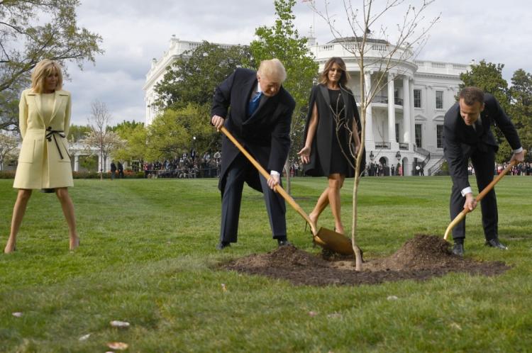 Árvore foi plantada em 23 de abril de 2018