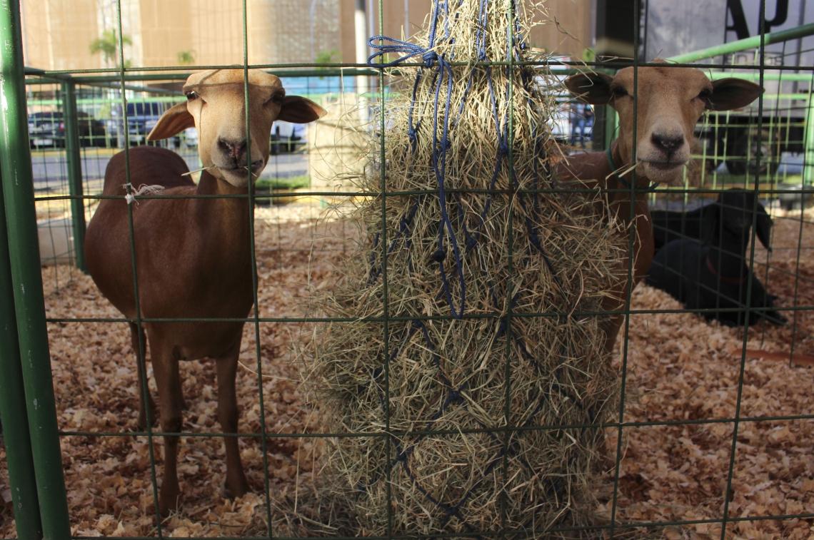 PEC NORDESTE tem exposição de animais, no Centro de Eventos do Ceará