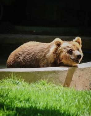 Ursos transferidos de Canindé para São Paulo