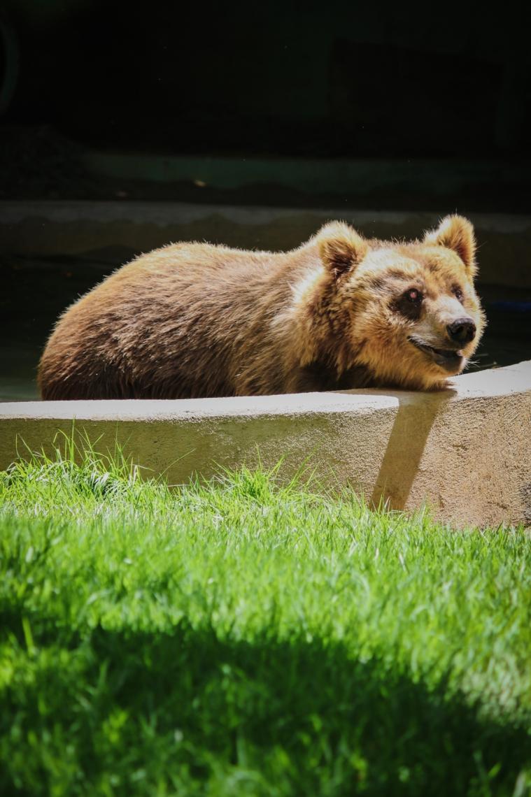Ursos estão em zoológico de Canindé