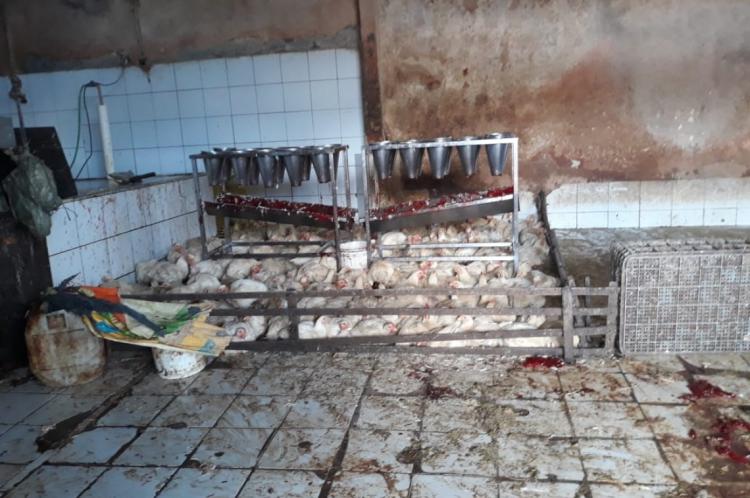 No momento da fiscalização, o ambiente estava sujo, com fezes e sangue no chão, juntamente com os animais vivos.