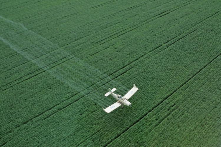 Três produtos representaram 96% da produção total de grãos: milho sequeiro, feijão-de-corda 1ª safra e arroz irrigado (Foto: MÁRCIO FERNANDES DE OLIVEIRA/AE)