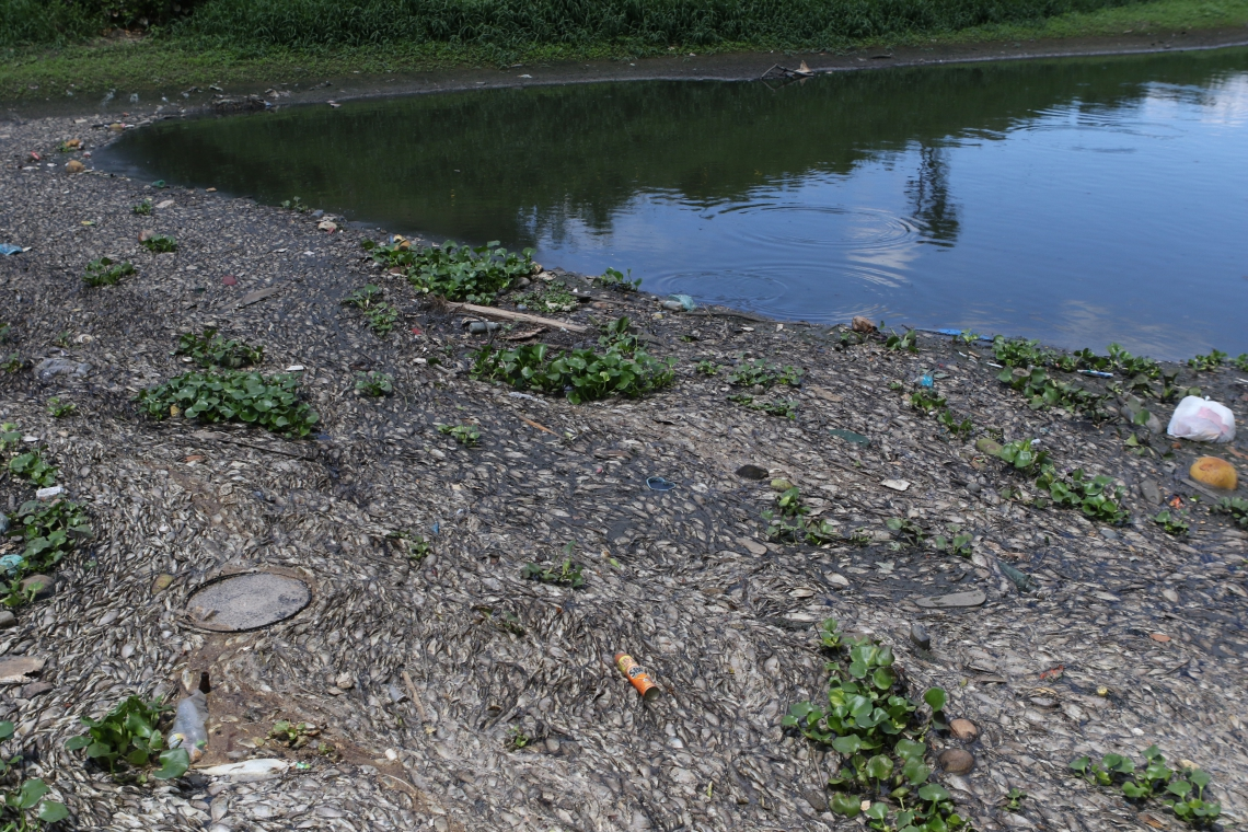 Peixes aparecem mortos em trecho do rio Cocó.