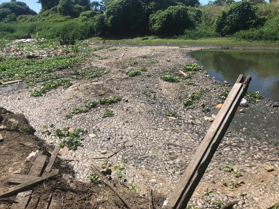Grande quantidade de peixes mortos se acumula na margem do Rio Cocó.