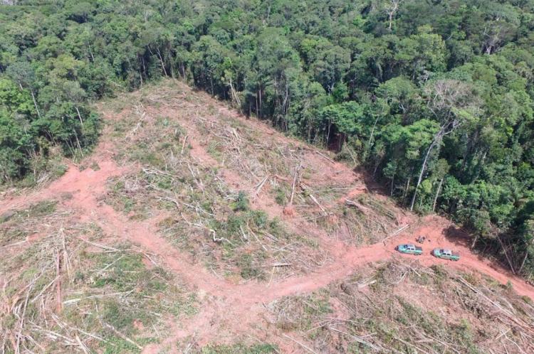 No Brasil, pelo menos oito ativistas envolvidos em disputas com representantes da indústria da soja morreram em 2018 apenas no Pará