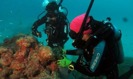 Além de recifes de corais, já foram documentadas 153 espécies de peixes ósseos, 12 de peixes cartilaginosos, uma de golfinho e três de tartarugas.