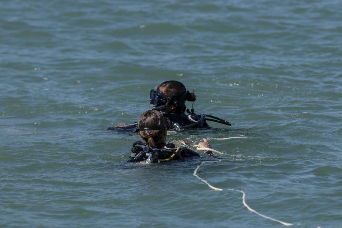 Pesquisadores mergulham para estudar espécies como peixes, corais e esponjas