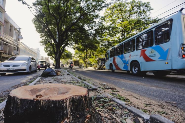 Arvore foi retirada na Avenida Duque de Caxias próximo ao Santuario Coração de Jesus no centro da Cidade para obra de mobilidade