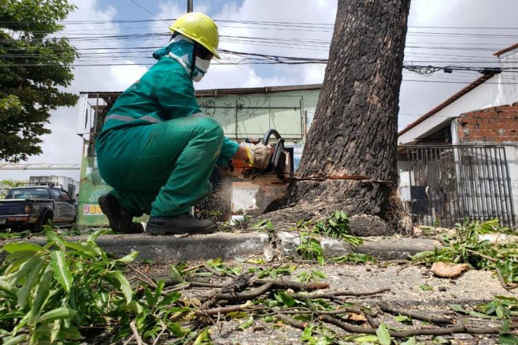 Trabalhadores retiravam na manhã desta quarta-feira, 4, árvores do canteiro em frente ao Tiradentes, escola localizada na avenida Duque de Caxias (Foto: Aurélio Alves/ O POVO)
