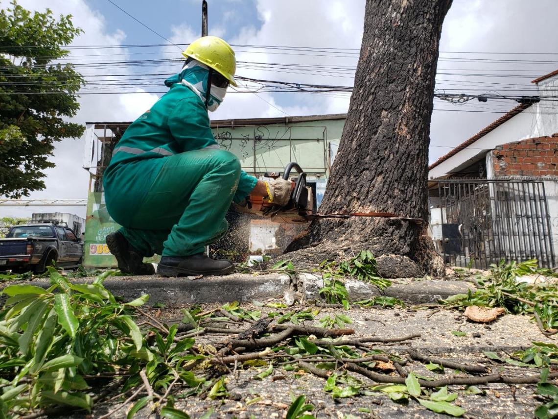 Trabalhadores retiravam na manhã desta quarta-feira, 4, árvores do canteiro em frente ao Tiradentes, escola localizada na avenida Duque de Caxias