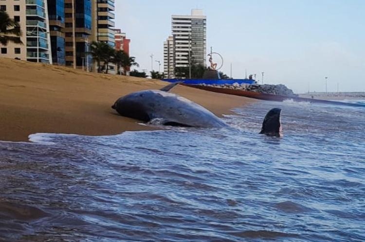 Corpo do animal, porém, teria sido removido pela própria maré ou por uma terceira pessoa, de acordo com ONGs