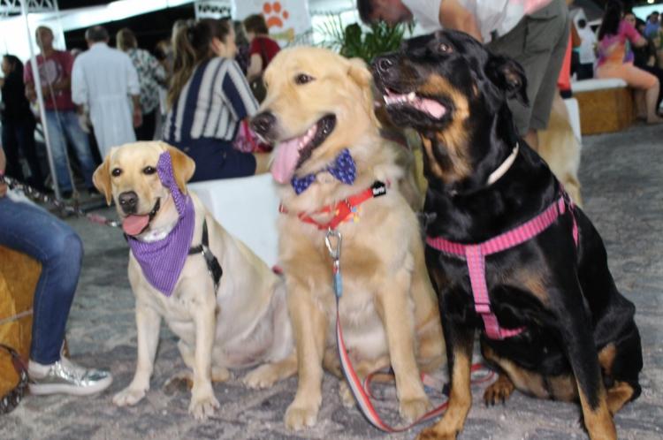 2ª edição da  Feira de Exposições e Entretenimento para Pequenos Animais acontece neste fim de semana em Fortaleza.