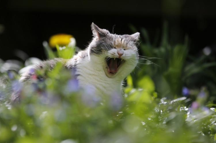 Para quem diz que gato é insensível, pesquisa analisou indicadores de relação de apego dos felinos aos humanos, incluindo busca por proximidade e angústia de separação
