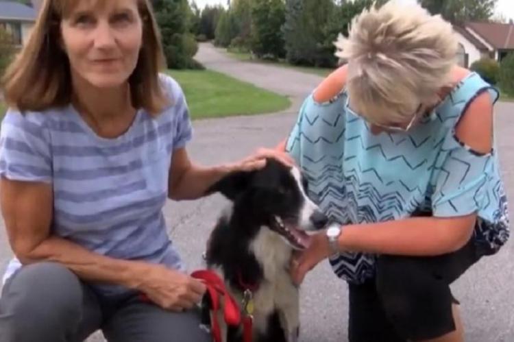 Mulher pede demissão do emprego e sai em busca da cadela pedida.