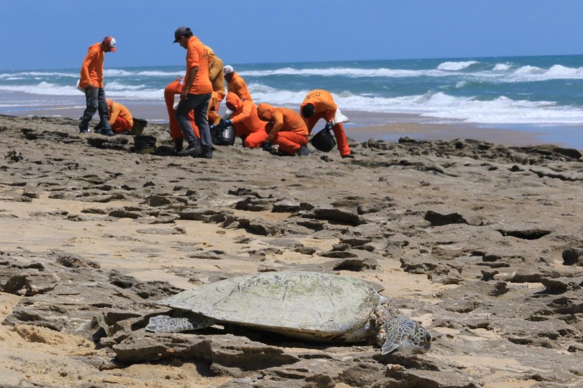 (Foto: Fabio Lima)FORTALEZA, CE, BRASIL, 10.10.2019: Orgãos ligados ao meio ambiente promovem limpeza de óleo na praia da Sabiaguaba.   (Fotos: Fabio Lima/O POVO)