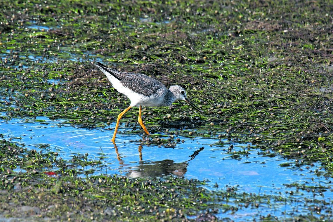 (Foto: Demitri Túlio)Aves de Icapuí. Pesquisadores da ONG Aquasis estão preocupados com a contaminação da área de alimentação das aves em Icapuí, no Ceará, pela macha de petróleo cru que atinge o litoral do Nordeste do Brasil. Outubro de 2019. Crédito: Demitri Túlio.
