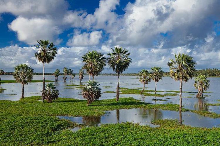 Lagoa da Precabura poderá se tornar Unidade de Conservação