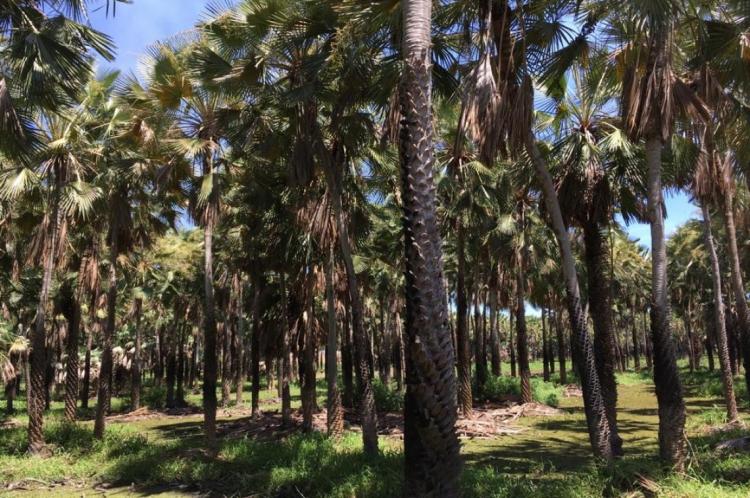 Lagoa da Precabura fica no limite entre Fortaleza e Eusébio