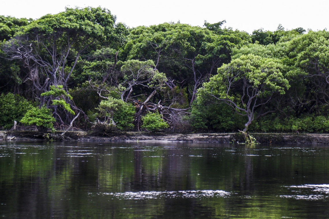 No Ceará, a união entre as décadas é personificada pelos manguezais, áreas de transição entre terra e mar.