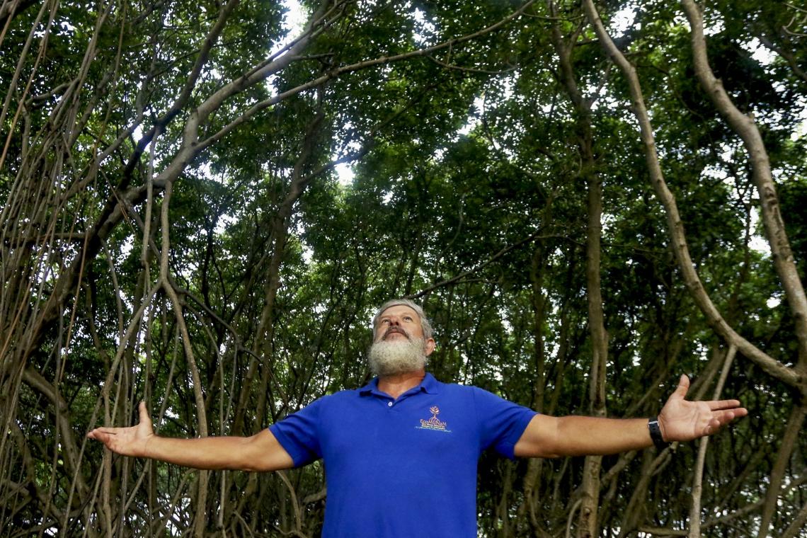 Em Fortaleza, o EcoMuseu do Mangue é uma das instituições voltadas à preservação do ecossistema.
