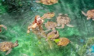 Nadar com tartarugas é uma das atividades do Baraka's Turtle Aquarium