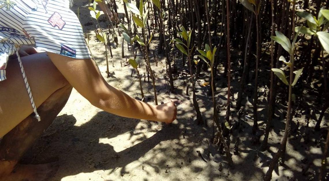 Ação do Museu Natural do Mangue(Foto: Reprodução)