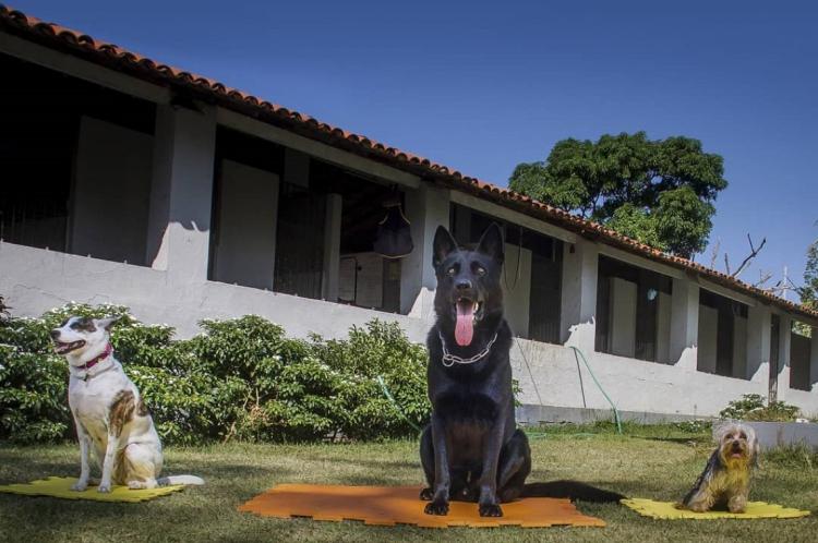 Cachorros brincam na área de lazer da hospedagem para animais